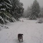 Nov 19,2011 Snow 069