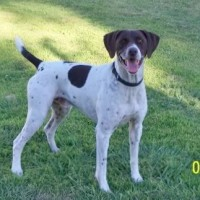 Lost GSP Shasta in Elverta, CA