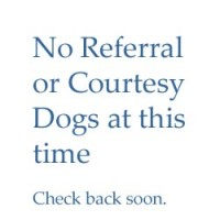 Referral Dogs – none