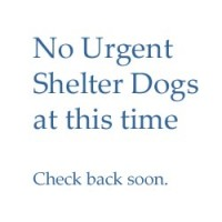 Shelter Dogs – none