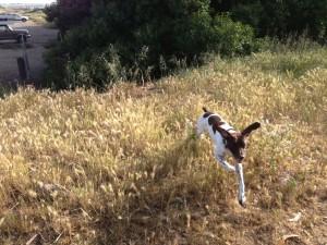 janie running