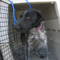 Pretty – Female – Shelter Dog in Porterville