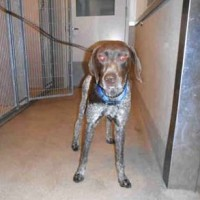 Male – Shelter Dog in Atwater
