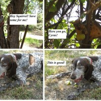 Cyrus befriends a squirrel