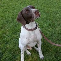 Rally's service dog story