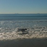 And has a good frolic in the waves!