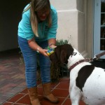 Rally gets a royal welcome at his dog-friendly hotel in Coronado.
