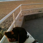 Rally enjoys the view of Imperial Beach...