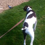 Taking some time out of his busy travel schedule to stalk a pigeon in the park.