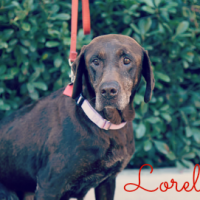 Lorelei – Our Foster Dog