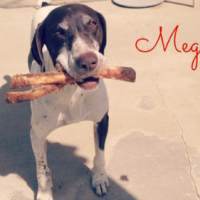 Meg – Our Foster Dog