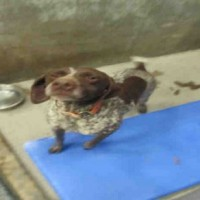 ID#A560084 – Female – Shelter Dog in Jamestown