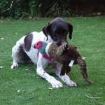 Ella loves her toy duck!