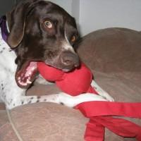 Oscar – Our Foster Dog