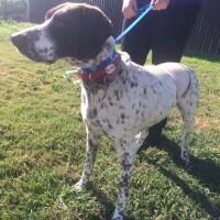 Vera – Female – Shelter Dog in Visalia, CA