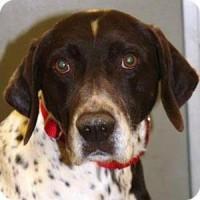 Joker- Male- Shelter Dog in Grass Valley