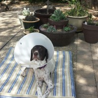 Flapjack's Bucket List – #6 Look Cool in a Cone