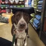 Vixen graduated!