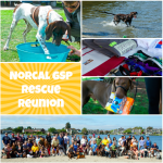 rescue reunion collage 2015 cropped