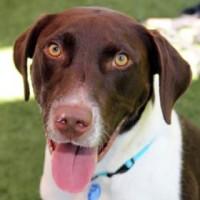 JJ- ID#27791535  – Male – Shelter Dog in Sacramento