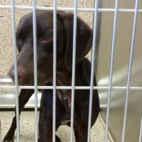 Found male GSP in Fresno, CA