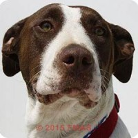Rose ID#13679646- Female – Shelter Dog in Madera, CA
