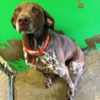 Male – Shelter Dog in Redding, CA