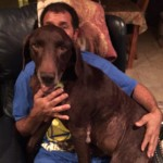 callie lap dog