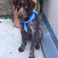 Brady – Our Foster Dog