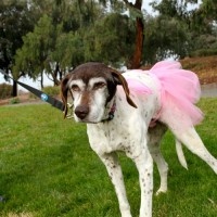 Vicki – Our Foster Dog
