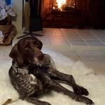 Herschel by the fire