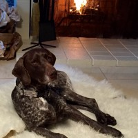 Herschel by the fire