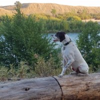 Finnigan – Our Foster Dog