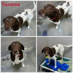 Savanna collage