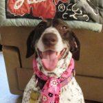 Layla in cooler collar