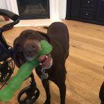 Charley is such a goofy boy!