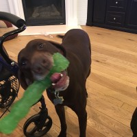 Charley – Our Foster Dog