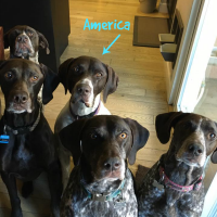 America – Our Foster Dog