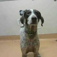 Bell – Female- Shelter Dog in Martinez
