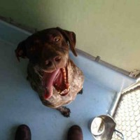 Henry – ID#A193396 – Male – Shelter Dog in Auburn