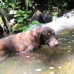 James cooling off after some squirrel chasing
