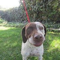 Freckles- 16882384- Female – Shelter Dog in Lindsay, CA