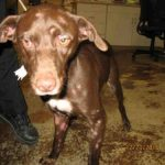 Brownie's shelter photo