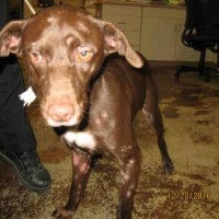Brownie – Our Foster Dog
