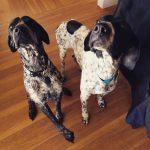 Hello Detective Dogs!