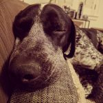 Holmes sleepy