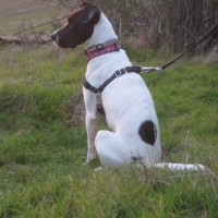 Sarah – Our Foster Dog