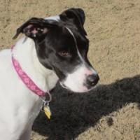 Sarah – Our Foster Dog
