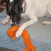 Sarah loves toys!