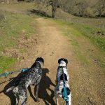 Holmes Watson hike 1
